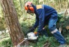 Adelaide Park Tree cutting services 21